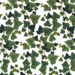 Tela loneta estampada con hojas de hiedra